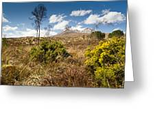 Gorse Bush On Mountain Approach Greeting Card