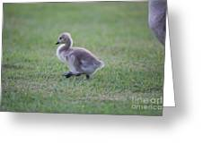Gosling Stroll Greeting Card