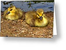 Goslings 001 Greeting Card