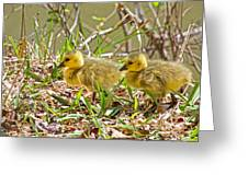 Little Ones Greeting Card