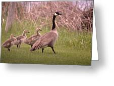 Goslings On A Walk Greeting Card
