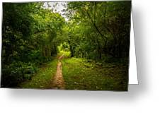 Gosnell Big Woods Trail Greeting Card