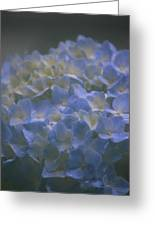 Got The Blues For You Greeting Card