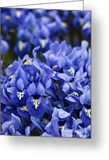 Got The Iris Blues Greeting Card