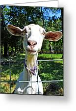 Got Your Goat Greeting Card