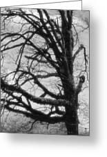 Gothic Oak Greeting Card