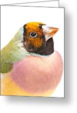 Gouldian Finch Erythrura Gouldiae Greeting Card