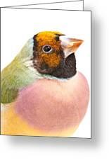 Gouldian Finch Erythrura Gouldiae Greeting Card