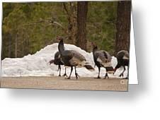 Gould's Wild Turkey Iv Greeting Card
