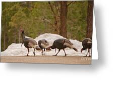 Gould's Wild Turkey V Greeting Card