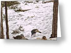 Gould's Wild Turkey Viii Greeting Card