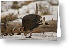 Gould's Wild Turkey Xi Greeting Card