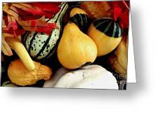 Gourd Group Of Fall's Bounty Greeting Card