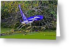 Gr8 Heron Flight Greeting Card
