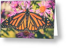 Grace And Beauty Greeting Card