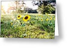 Grace Plantation Greeting Card