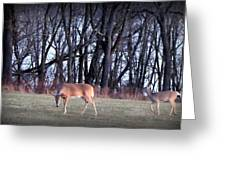 Graceful Deers Greeting Card by Jose Lopez