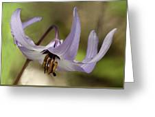 Graceful Fawn Lily Greeting Card