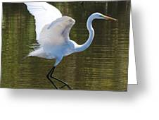 Graceful Great Egret Flying Greeting Card