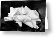 Graceful Soft And Sweet Greeting Card