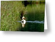 Graceful Swan Greeting Card by Lizbeth Bostrom