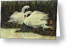 Graceful Swans Greeting Card