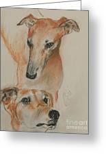Graciously Greyhound Greeting Card