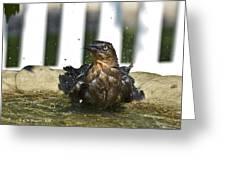 Grackle In The Bird Bath 1 Greeting Card