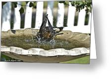Grackle In The Bird Bath 3 Greeting Card
