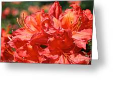 Grade A Azalea Greeting Card