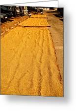 Grain Drying Greeting Card