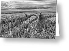 Grain Field Tracks Greeting Card