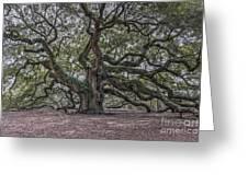 Grand Angel Oak Tree Greeting Card
