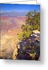 Grand Canyon 55 Greeting Card