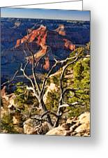 Grand Canyon Branches Greeting Card