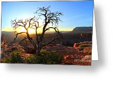 Grand Canyon Gathering The Light Greeting Card