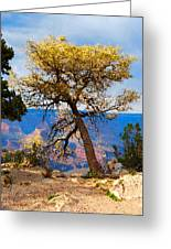 Grand Canyon National Park And Tree Greeting Card