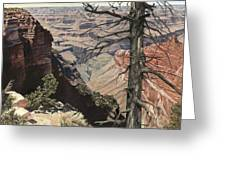 Grand Canyon View Weathered Tree Right Side  Greeting Card