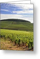 Grand Cru And Premier Cru Vineyards Of Aloxe Corton. Cote De Beaune. Burgundy. France. Europe. Greeting Card by Bernard Jaubert