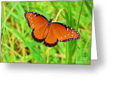 Grand Monarch Greeting Card
