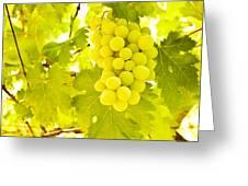 Grape Branch Greeting Card