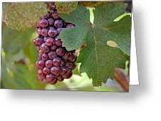 Grape Bunch Greeting Card