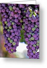 Grape Bunches Portrait Greeting Card