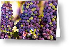 Grape Bunches Wide Greeting Card