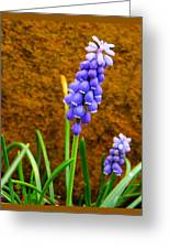 Grape Hyacinth And Sandstone  Greeting Card