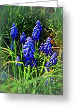 Grape Hyacinths 2014 Greeting Card