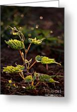 Grape Leaf In Morning Time Greeting Card