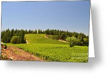 Grape Vines Apple Hill Greeting Card