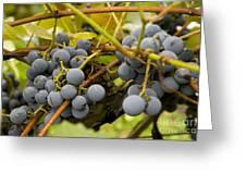 Grape Work Greeting Card