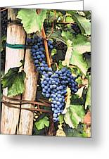 Grapes 1 Greeting Card